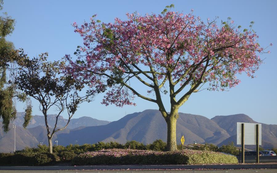 Camarillo California
